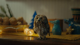 876 - Mimi The Owl Is Learning To Fly
